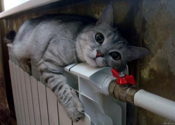Без выполнения этих требований и коту будет несладко.
