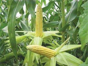 биотопливо из опилок