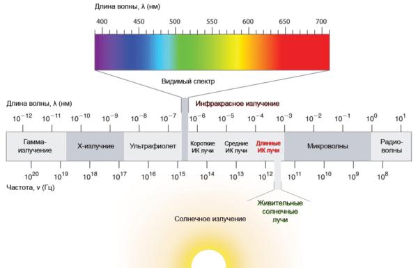 Инфракрасные лучи отличаются от света видимого спектра большей длиной волны.