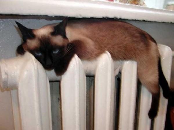 Почему не отключают отопление, у вас не спросит разве любимая сиамская кошка. Но её любовь к теплу нужно как-то согласовать со стоимостью «Вискас», она то этого не понимает